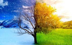 tree winter to spring
